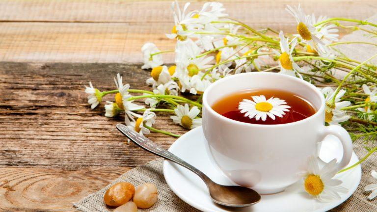 trà hoa cúc 2